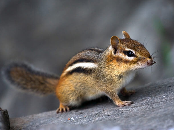 Animal Pest Control Wildlife Removal Services Oakland